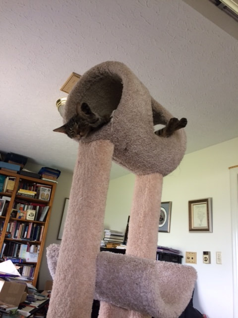 A gray tabby cat lounges in a carpeted tube that's part of a cat tower. His eyes are closed and he looks very content.