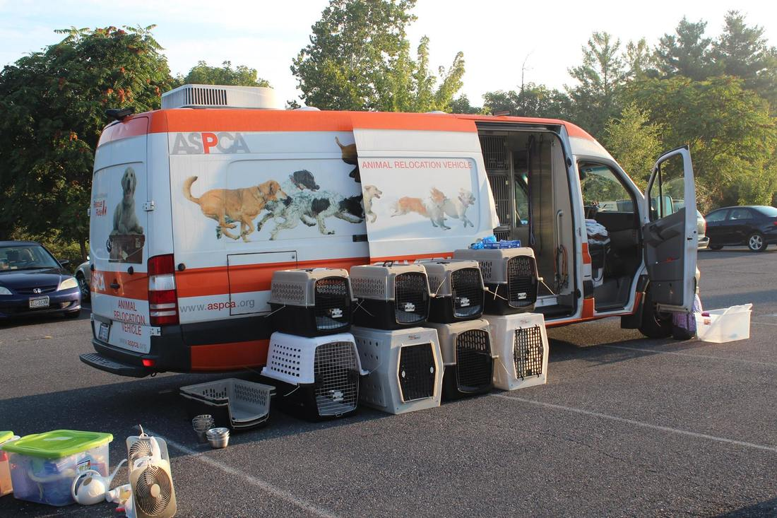 A white and orange ASPCA transport van is parked in the sunshine. Empty crates awaiting furry passengers are lined up alongside it.